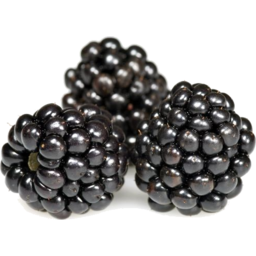 Photo of Sunbelle Blackberry Clamshell