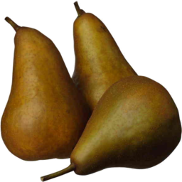 Photo of Pears - Beurre Bosch