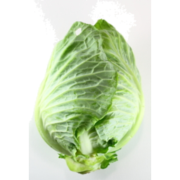 Photo of Cabbage Plain