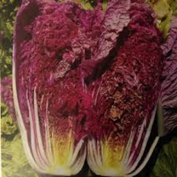 Photo of Cabbage Wombok Red Whole Ea