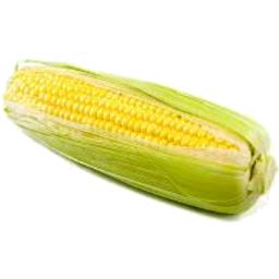 Photo of Sweet Corn Yellow Loose