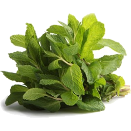 Photo of Mint Bunch Organic