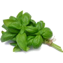 Photo of Basil Fresh Bunch