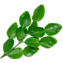Photo of lime leaves 10g
