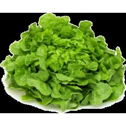 Photo of Organic Lettuce Oak Leaf Ea