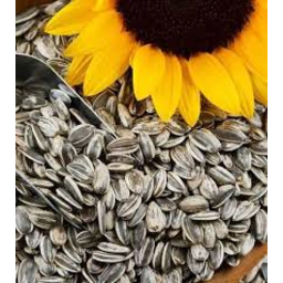 Photo of Sunflower Seeds Per Kg