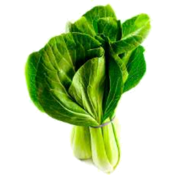 Photo of Pak Choy Organic Bunched