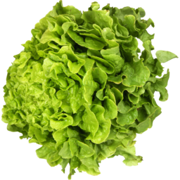 Photo of Hydroponic Lettuce