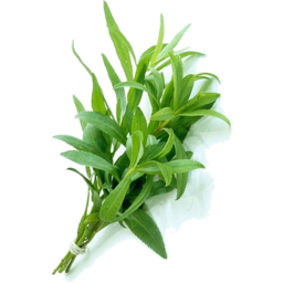 Photo of Tarragon Bunch