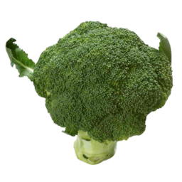 Photo of Brocolli