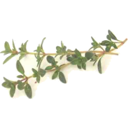 Photo of The Good Grocer Collection Fresh Lemon Thyme 10g