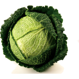 Photo of Cabbage Savoy Whole