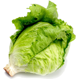 Photo of Lettuce - Iceberg