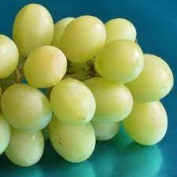 Photo of Grapes White Sugraone Kg
