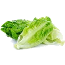 Photo of Lettuce  Cos Twin Pack
