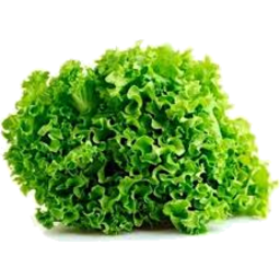 Photo of Thymebank Lettuce Fancy