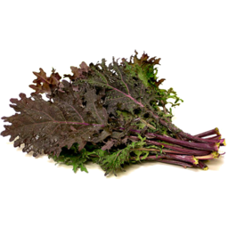 Photo of Kale Red