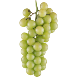 Photo of Grapes White Seedless KG