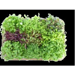 Photo of Cress Micro Herb Pot