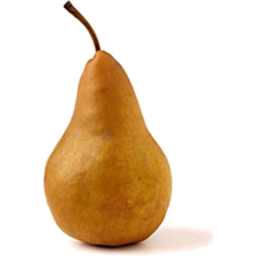 Photo of Pear Beurre Bosc (Brown) Small