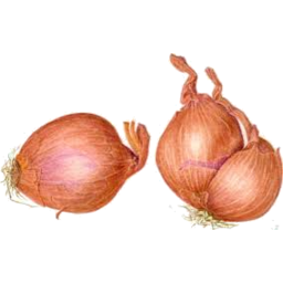 Photo of Onions Shallots Bulb Kg