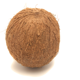 Photo of Coconut
