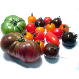 Photo of Tomatoes - Mixed Heirloom