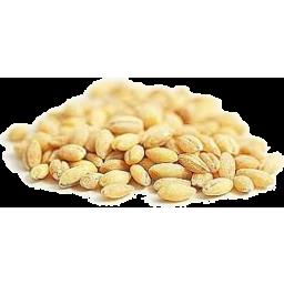 Photo of Barley - Kernels