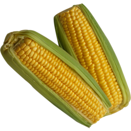 Photo of Sweet Corn Yellow