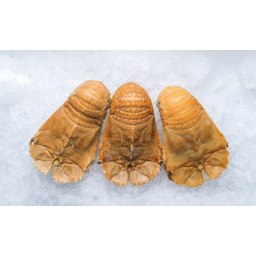 Photo of Cooked Moreton Bay Bugs (Frozen)