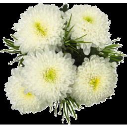Photo of Sv Chrysanthemums