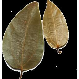 Photo of Cinnamon Leaves