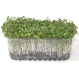 Photo of Broccoli Sprout