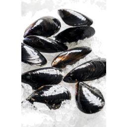 Photo of Live Blue Mussels