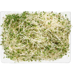 Photo of Sprout Alfalfa 125gm