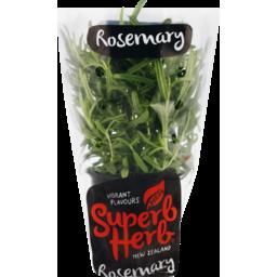 Photo of Fresh Superb Rosemary