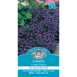 Photo of Mr Fothergills Lobelia Crystal Palace Compact