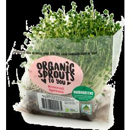 Photo of Australian Wheatgrass Live Broccoli Sprouts