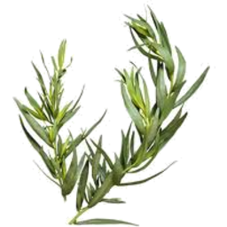 Photo of Herbs Tarragon - Fresh