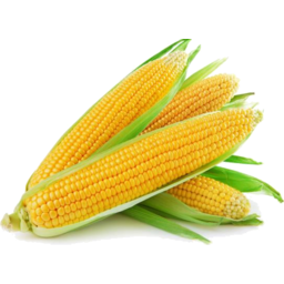 Photo of Sweet Corn