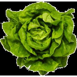 Photo of Hydro Lettuce Mignonette