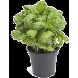 Photo of Basil Pot