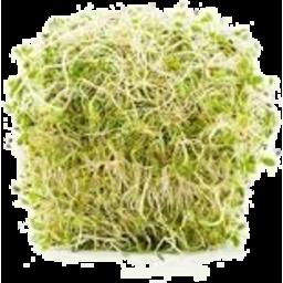 Photo of Alfalfa Green 150g