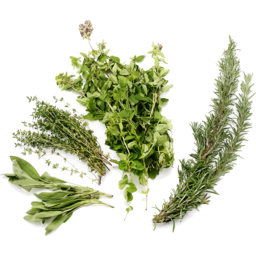 Photo of Herb - Mixed Bunch
