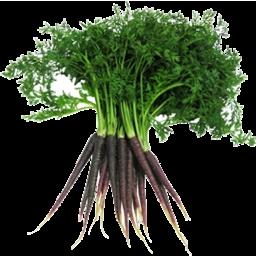 Photo of Carrots Dutch Purple Bunch