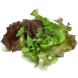 Photo of Lettuce Leaves Loose
