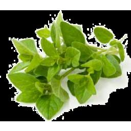 Photo of Herbs Oregano