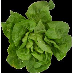 Photo of Lettuce Butter Leaf