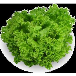 Photo of Fancy Lettuce Green- Biondi