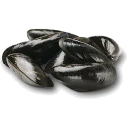 Photo of Black Mussels Kg